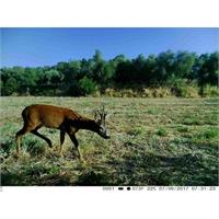 trail-camera-fototrappola-trail-camera-3g-3-0cg-hd-1080p_image_5