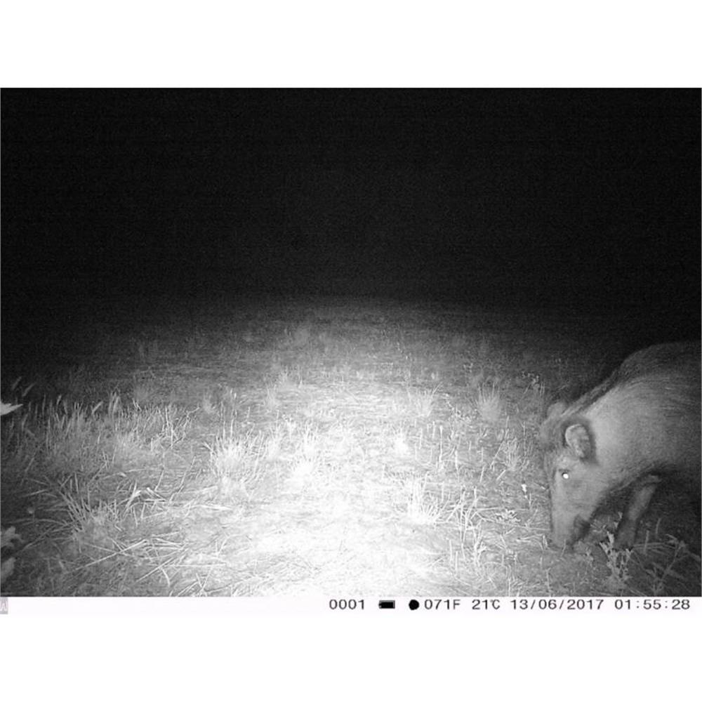 trail-camera-fototrappola-trail-camera-3g-3-0cg-hd-1080p_medium_image_6