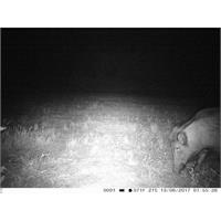 trail-camera-fototrappola-trail-camera-3g-3-0cg-hd-1080p_image_6